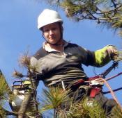 Jérôme Paulin dans arbre sapin pour élagage avec tronçonneuse