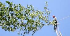 grimpeur avec harnais démonte la cime d'un arbre