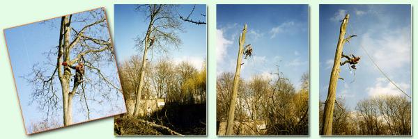 4 photos d'un grimpeur qui démonte un arbre morceau par morceau