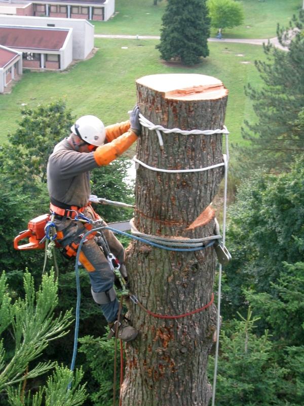 grimpeur démonte un arbre